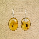 Cognac color copal bean earrings #04