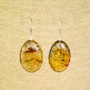 Cognac color copal bean earrings #05